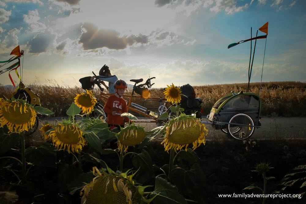 Sunflowers and cycles on the Camino de Santiago