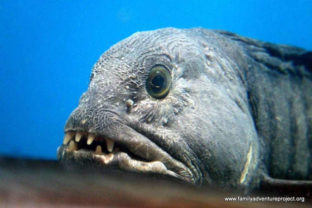 Fish in Aquarium, Torshavn, Faroe Islands