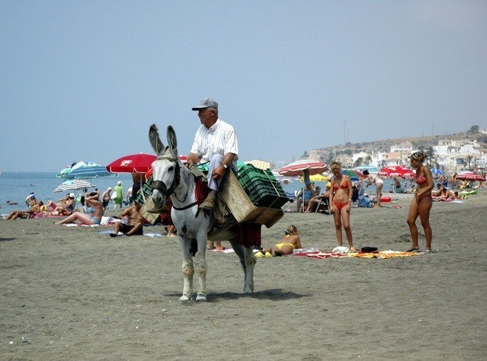 Donkey on Malaga Beach Image http://www.flickr.com/photos/sdickter/84619156/ by Hollywood Pimp Stephen Dickter http://www.flickr.com/photos/sdickter/