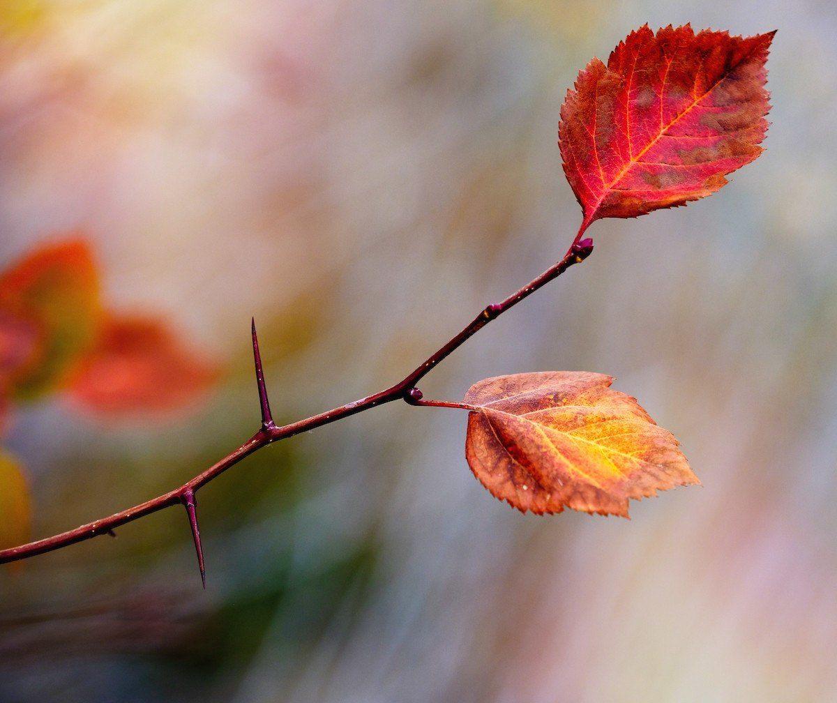 Autumn Leaves Fuji XT20 Karen Hutton