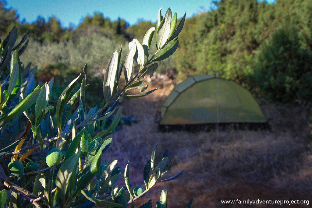 Camping on Hvar in olive grove