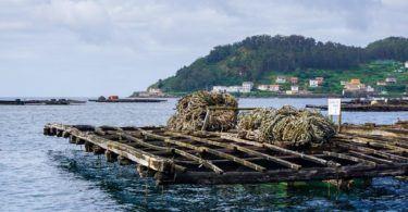 Mussel fishing trip Bay of Muros, Galicia