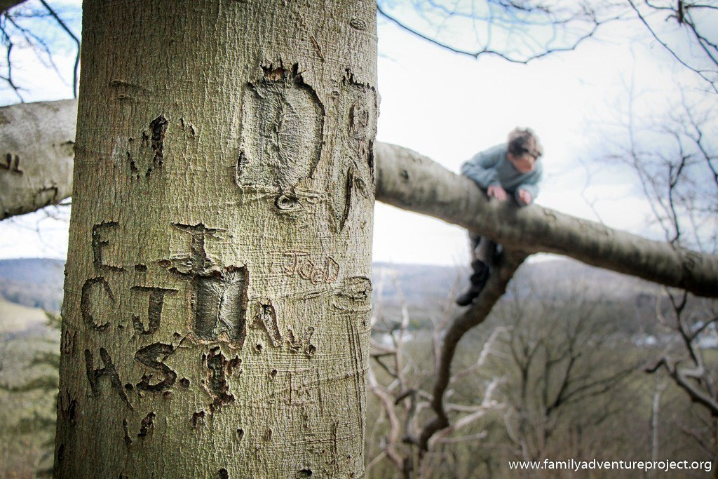 Kids outdoors climbing on an engraved old tree in the woods