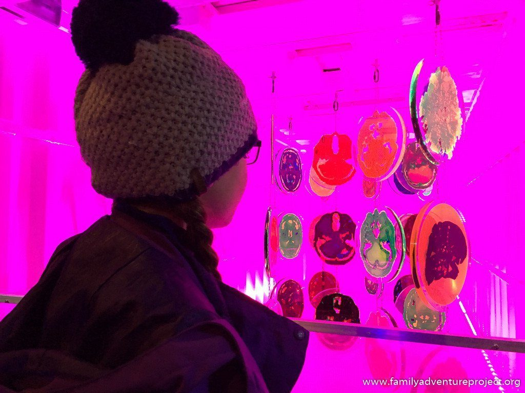 Lightpool installation in Blackpool, Brain Container by Jo Berry