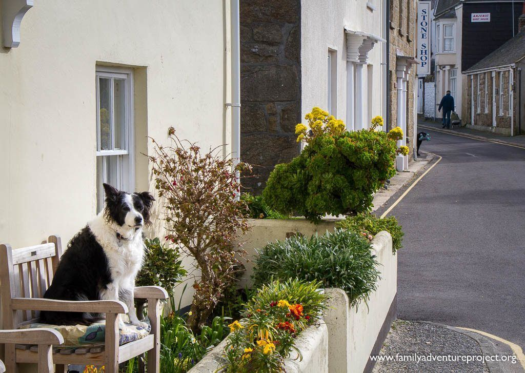 Dog sits out in Hugh Town, St Mary's, Isles of Scilly