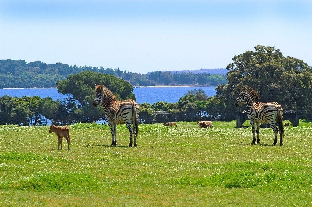 Brujini Zoo, Image courtesy Istria Tourist Board