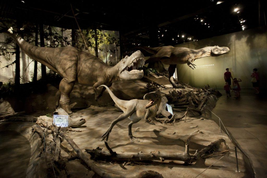 Dinosaur exhibit in Royal Tyrell Museum, Drumheller Image Credit Canadian Tourism Commission